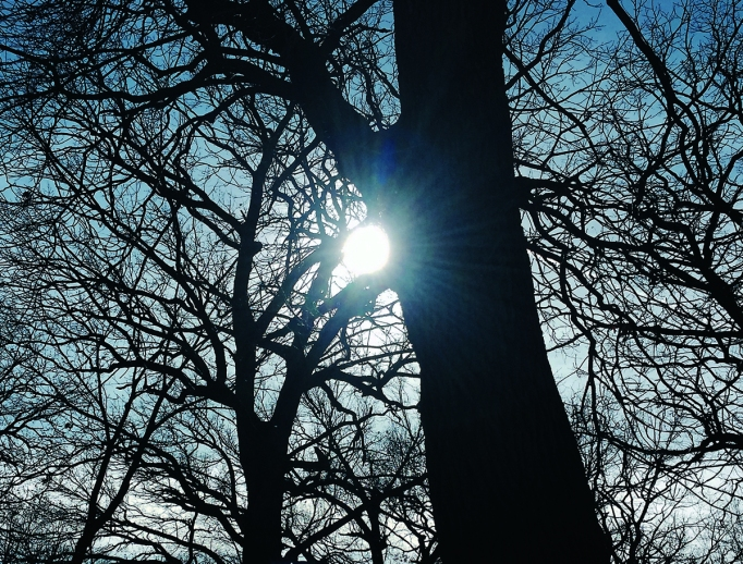 sun through trees for fb