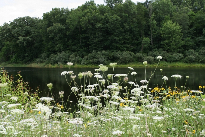 queen annes lace and lake