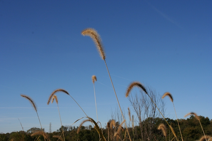 autumn grass against sky