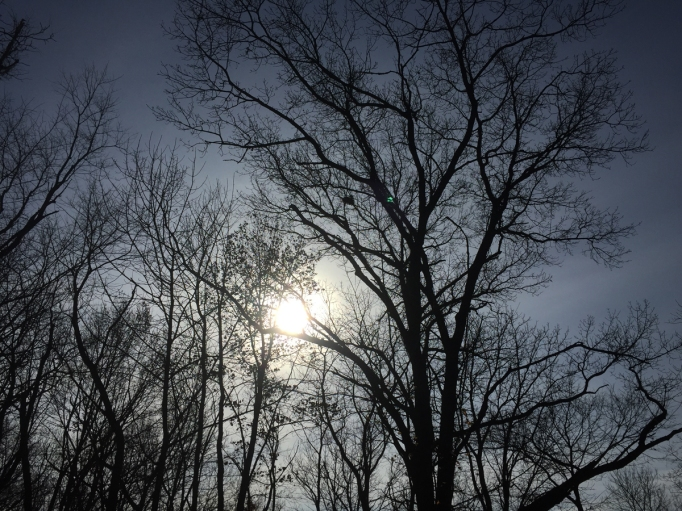 sky and hazy sun through winter trees